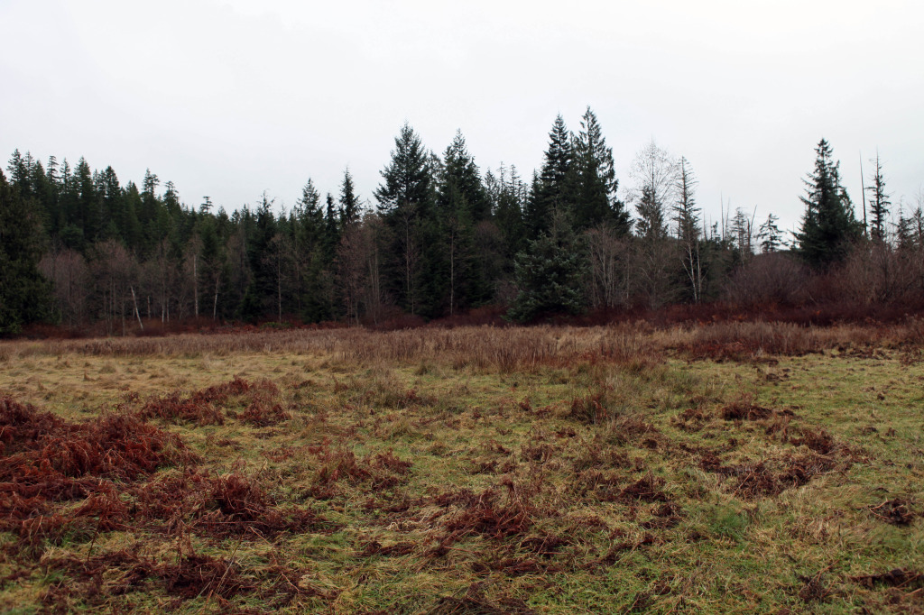 quadraisland_24acres2_dec132014